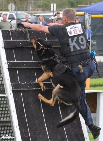 K-9 Officer Climbing Obstacle